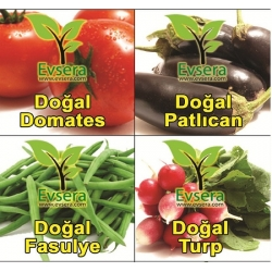 DOGAL SEBZE TOHUMU SETİ 4 lü(Domates,Patlıcan,Fasulye,Turp)