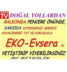 Eko Evsera